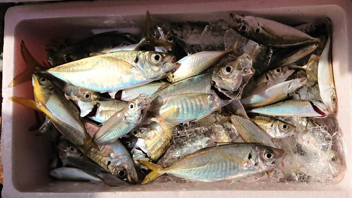 Familyfishing12_20190903153001